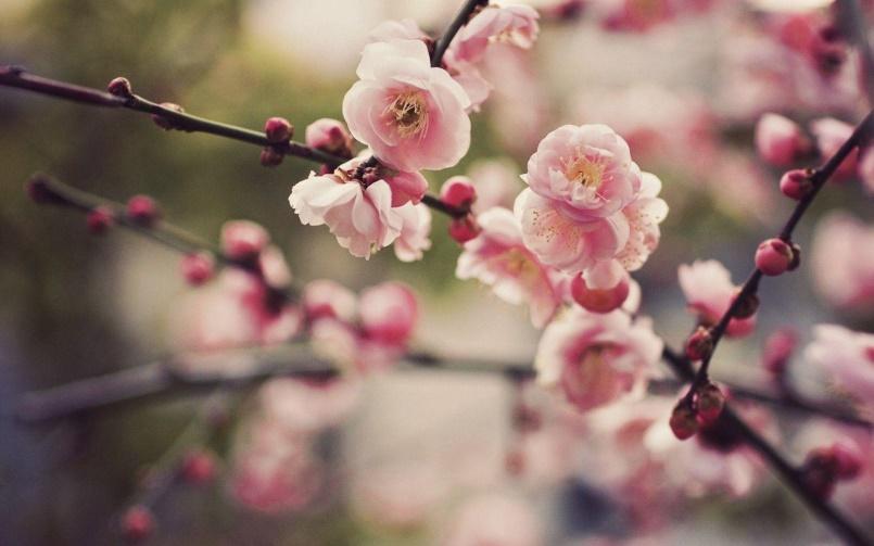 Reminder: Sakura Social and AGM This Sunday